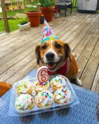 Birthday Cake Dog Meme - i has a hotdog birthday funny dog pictures dog memes puppy