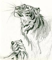 tiger sketch iii by sarah rossero on deviantart