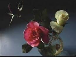 enya china roses