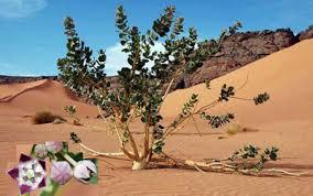 Snow In Sahara Top 10 Fascinating Facts About Sahara Desert