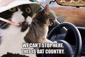 Fear Meme - cat meme fear and loathing in las vegas cats bat country