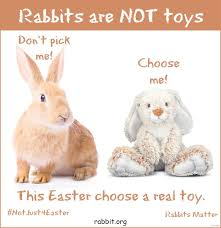 bunnies for easter flyers for easter and bunnies don t mix house rabbit society