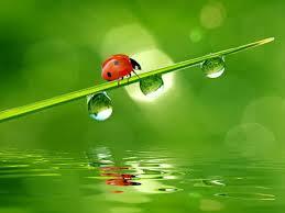 the message from the beautiful orange ladybug pcm interactive u0027s