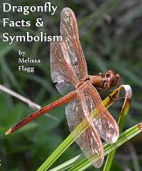 dragonfly facts and symbolism owlcation