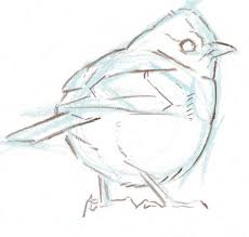so you want to draw birds what to pack in your field sketching