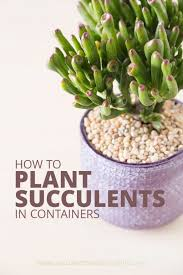 How To Save A Dying Plant How To Plant A Succulent Succulents And Sunshine