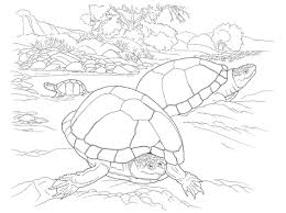 100 printable turtle coloring pages walking alligator snapping