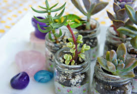 Ideas For Indoor Succulents Design Ideas For Indoor Succulents Design 19333