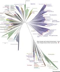 microbial metagenomics reveals climate relevant subsurface