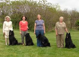 belgian sheepdog national specialty cole slipcheck belgian sheepdogs