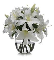 casablanca lilies casablanca meaning of happiness and celebrations