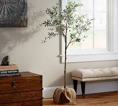potted olive tree pottery barn
