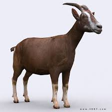 3drt goat animated cgtrader