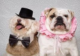 dog weddings sweet or cruel 20 pics animal u0027s look