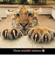 Kittens Memes - 25 best memes about kittens meme kittens memes