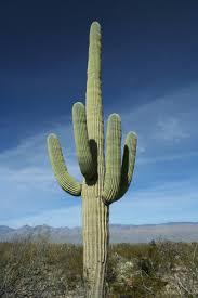 Seeking Cactus Imdb The Cinema Burnham On Crouch