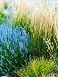 lovely and enchanting garden grasses ornamental grass how to