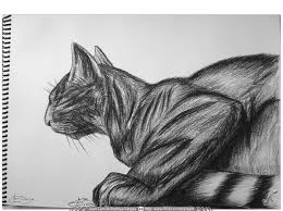 imagenes a lapiz de gatos the world s best photos of lapiz and tradicional flickr hive mind
