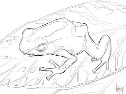 dyeing dart frog coloring page free printable coloring pages