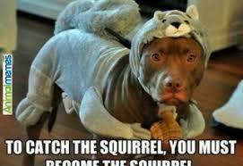 Funny Puppy Memes - funny dog memes archives page 5 of 9 what breed is it