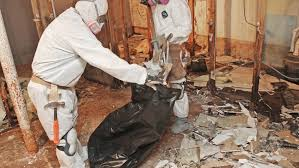 mold removal and remediation angie s list