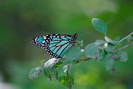 blue monarch butterfly stock image image of tree white 608691