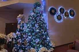 blue and white tree lights rainforest islands ferry