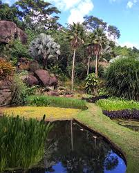 plants native to brazil ad100 architect alexander gorlin tours roberto burle marx u0027s lush