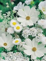 Nice Flower Picture - best 25 white flowers ideas only on pinterest wedding flower