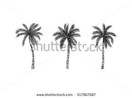 coconut tree icons free vector stock graphics images