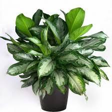 plants low light 14 top houseplants you should pick for very low light area tnc