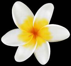 plumeria flower plumeria png clipart image gallery yopriceville high quality