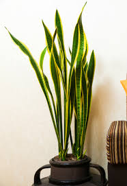 Best Indoor Plants For Oxygen by The 6 Best Houseplants For Clean Air Indoors Countryside Network