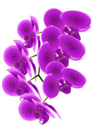 purple orchid flower free to use domain orchid flower clip