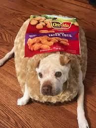 in costumes dogs dressed in costumes who is potato barking laughs