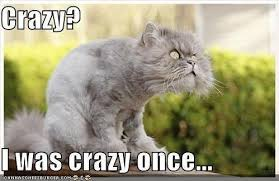 Crazy Cat Memes - crazy cat meme ian farah flickr