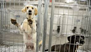 new minnesota law tightens collar on dog and cat breeders