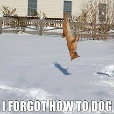 Funny Snow Meme - forgot how to dog dump a day