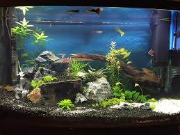 chambre aquarium idee decoration aquarium idee decoration jardin chambre noel bapteme