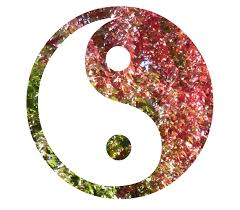 ying yang tree changing colour copy yinyangmother