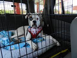 crate training crate training your deaf dog u2013 deaf dogs rock