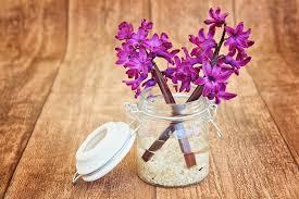 Hyacinth Flower Free Photo Fragrant Flowers Fragrant Flower Hyacinth Pink Max Pixel