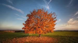 3840x2160 aspen trees 4k desktop background hd wallpaper