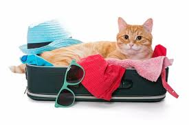 how to travel with a cat images Traveling with your cat cat therapy jpg