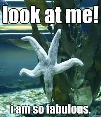 Starfish Meme - stern starfish