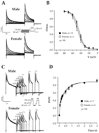 gender based differences in cardiac repolarization in mouse