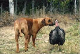 dogs and thanksgiving 4 dump a day