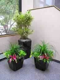 Indoor Plants Arrangement Ideas by Indoor T Display Ideas Doors Indoor Plant Decoration Ideas