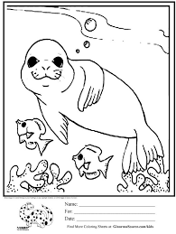 seal coloring page free animals monk seal printable coloring pages for preschool