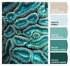 coral inspired color sw curio gray sw simplify beige sw bubble